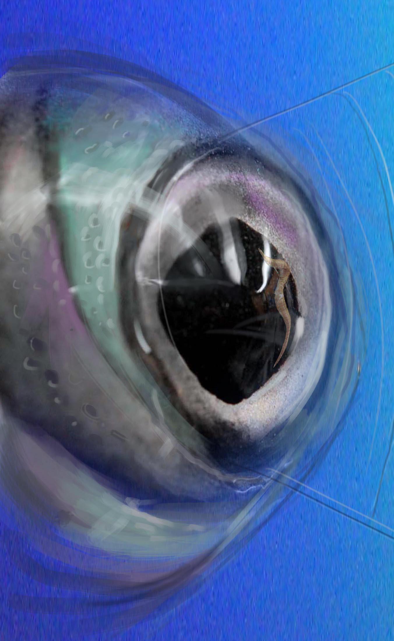 fish eye painted